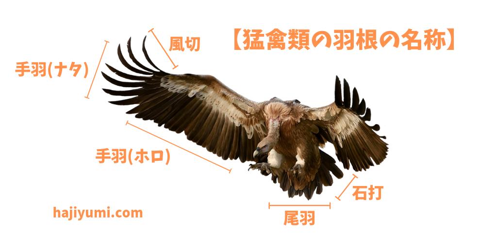 羽根の名称
