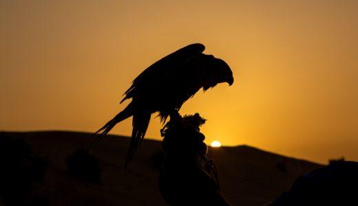 弓道の矢に使われている羽根の特徴と注意点【犬鷲ほか】